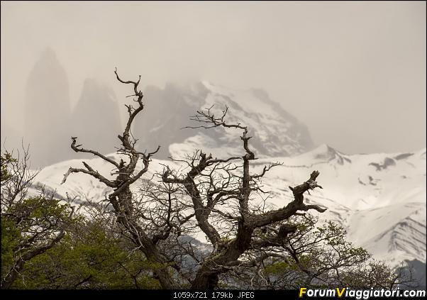 In Patagonia verso la fin del mundo-_dsc6594.jpg
