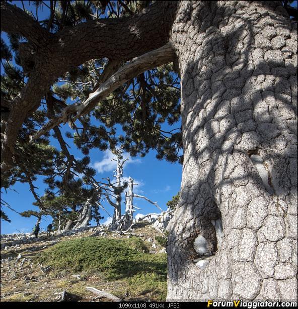 Un'estate tutta italiana: in montagna da sud a nord-dsc_5511.jpg