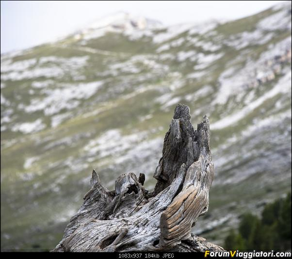 Un'estate tutta italiana, in montagna da sud a nord: il nord-dsc_4588.jpg