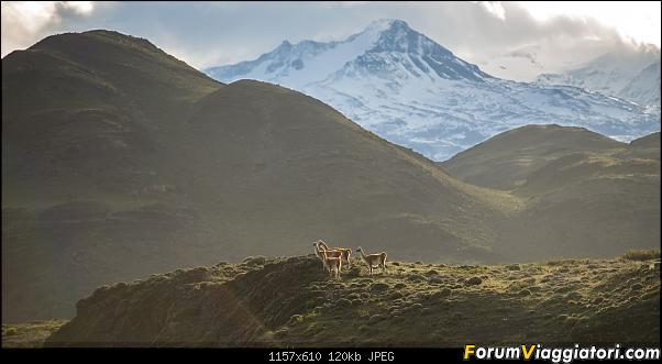 In Patagonia verso la fin del mundo-_dsc6763.jpg