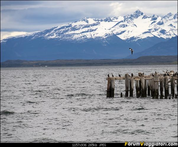 In Patagonia verso la fin del mundo-_dsc6798.jpg
