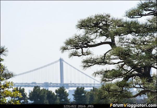 In Giappone in cerca dei ciliegi in fiore-_dsc8395.jpg