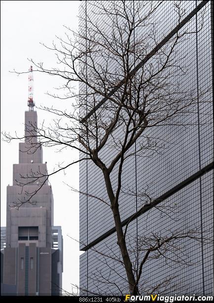 In Giappone in cerca dei ciliegi in fiore-_dsc8417.jpg