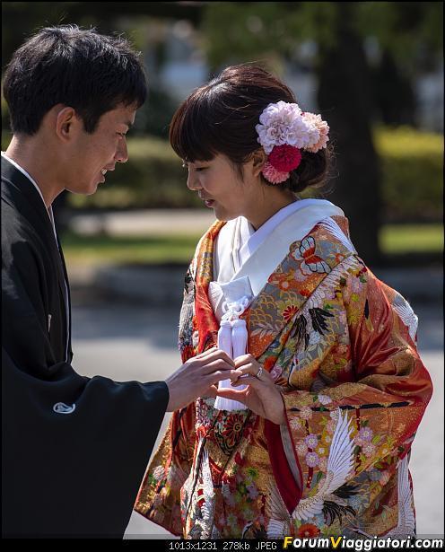 In Giappone in cerca dei ciliegi in fiore-dsc_6252.jpg