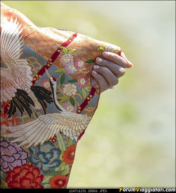In Giappone in cerca dei ciliegi in fiore-dsc_6257.jpg