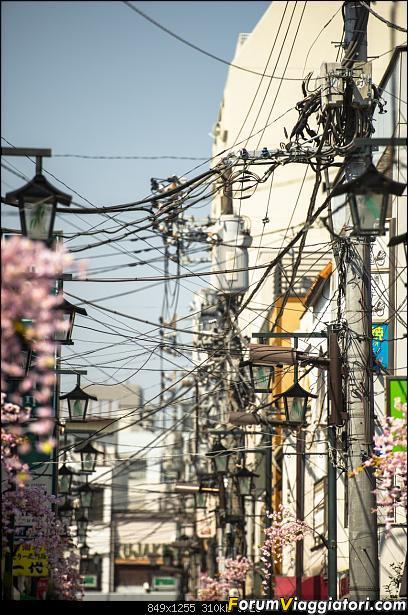In Giappone in cerca dei ciliegi in fiore-_dsc8546.jpg