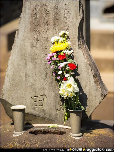In Giappone in cerca dei ciliegi in fiore-_dsc8601.jpg