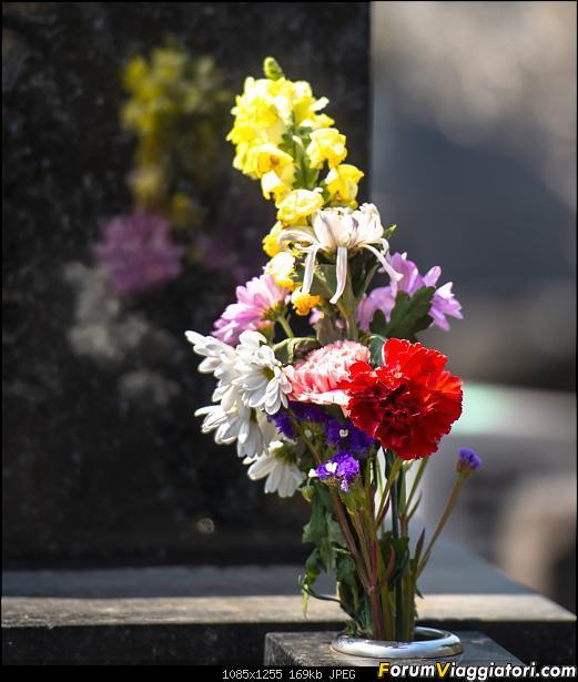 In Giappone in cerca dei ciliegi in fiore-_dsc8617.jpg