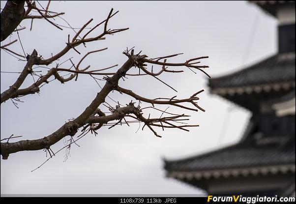 In Giappone in cerca dei ciliegi in fiore-_dsc8633.jpg