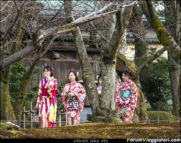 In Giappone in cerca dei ciliegi in fiore-_dsc8771.jpg