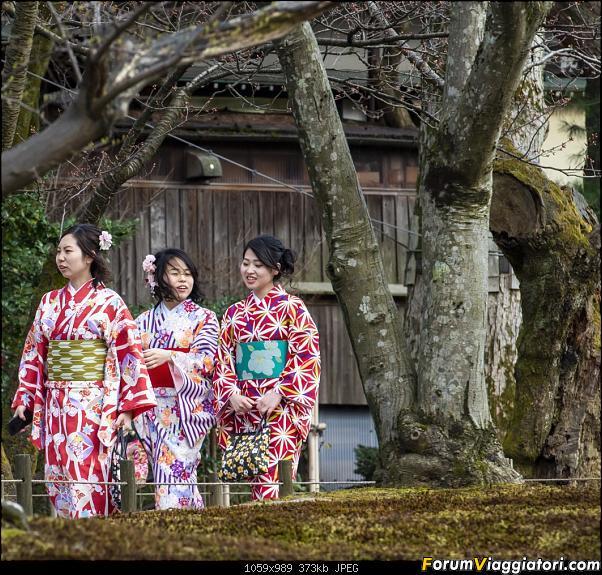 In Giappone in cerca dei ciliegi in fiore-_dsc8772.jpg