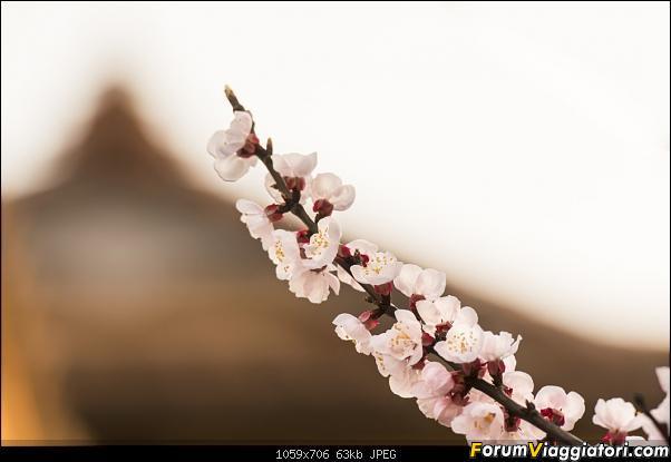 In Giappone in cerca dei ciliegi in fiore-_dsc8813.jpg