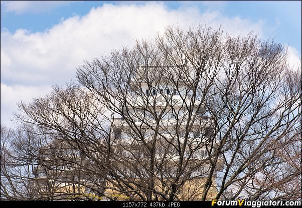 In Giappone in cerca dei ciliegi in fiore-_dsc8846.jpg