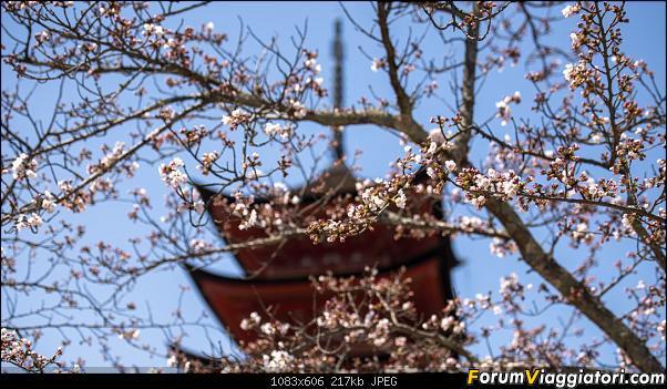 In Giappone in cerca dei ciliegi in fiore-_dsc8999.jpg
