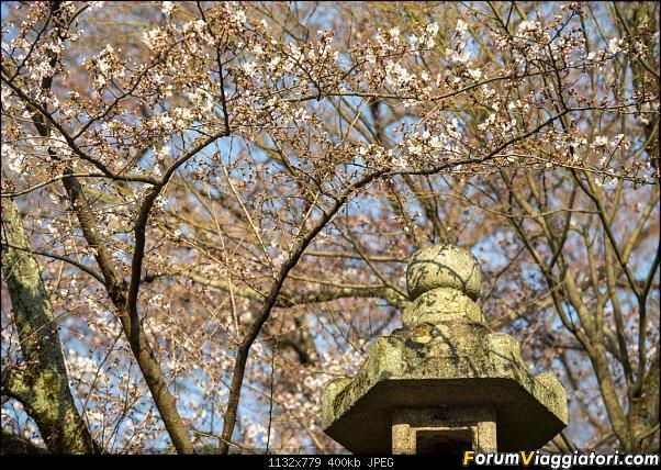 In Giappone in cerca dei ciliegi in fiore-_dsc9352.jpg