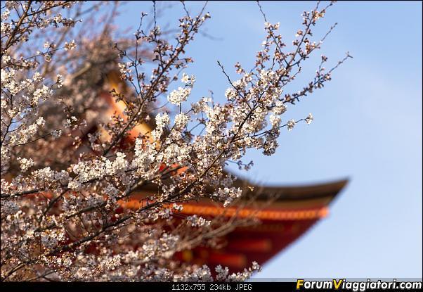 In Giappone in cerca dei ciliegi in fiore-_dsc9353.jpg