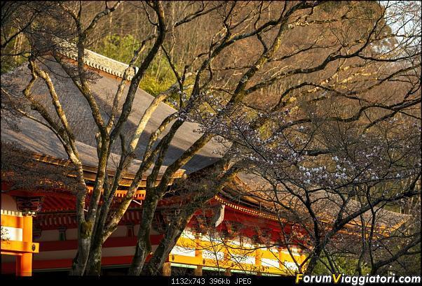 In Giappone in cerca dei ciliegi in fiore-_dsc9387.jpg