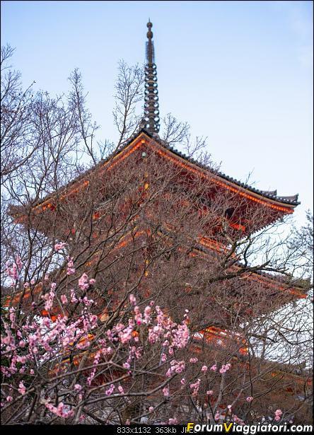 In Giappone in cerca dei ciliegi in fiore-_dsc9413.jpg
