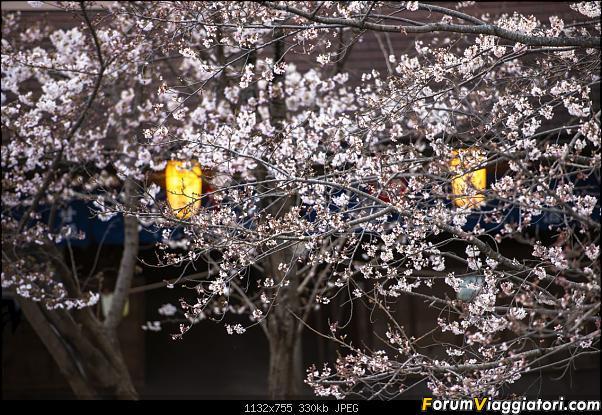 In Giappone in cerca dei ciliegi in fiore-_dsc9418.jpg