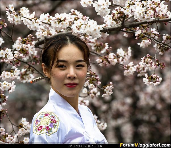 In Giappone in cerca dei ciliegi in fiore-_dsc9499_a.jpg