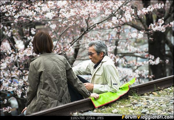 In Giappone in cerca dei ciliegi in fiore-_dsc9501_a.jpg