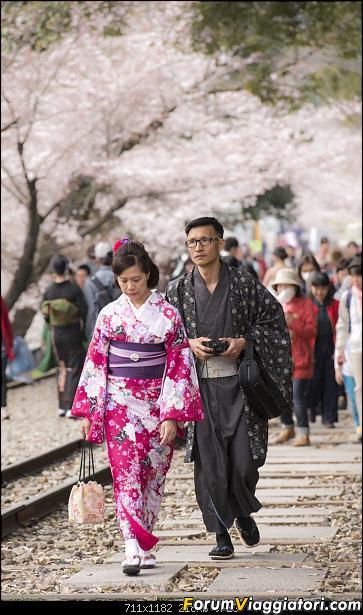 In Giappone in cerca dei ciliegi in fiore-_dsc9510.jpg