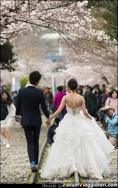 In Giappone in cerca dei ciliegi in fiore-_dsc9512.jpg