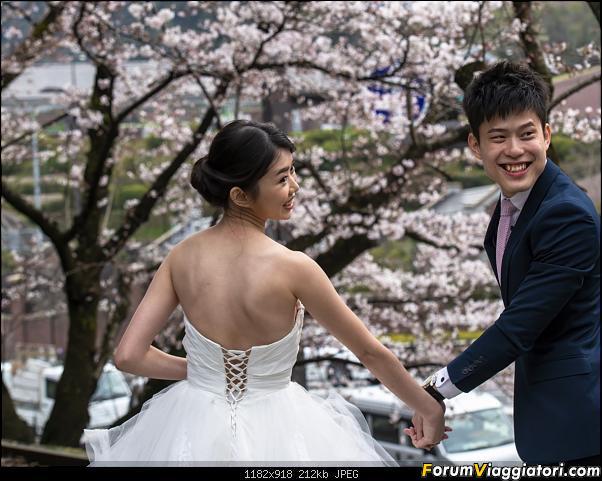 In Giappone in cerca dei ciliegi in fiore-_dsc9515.jpg