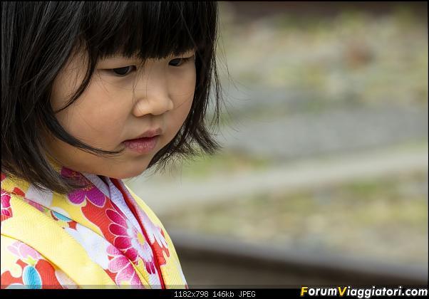 In Giappone in cerca dei ciliegi in fiore-_dsc9520_a.jpg