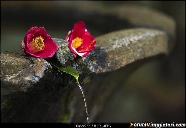 In Giappone in cerca dei ciliegi in fiore-_dsc9579.jpg