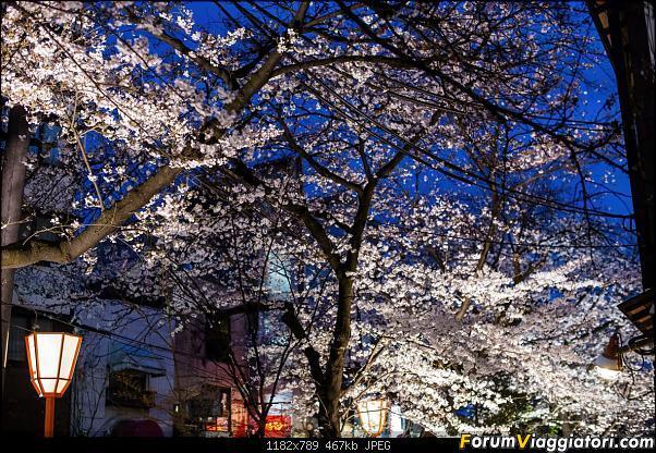 In Giappone in cerca dei ciliegi in fiore-_dsc9600.jpg