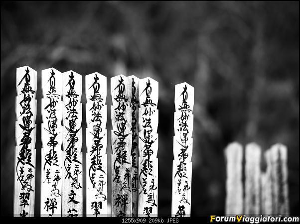 In Giappone in cerca dei ciliegi in fiore-_dsc9688-2.jpg