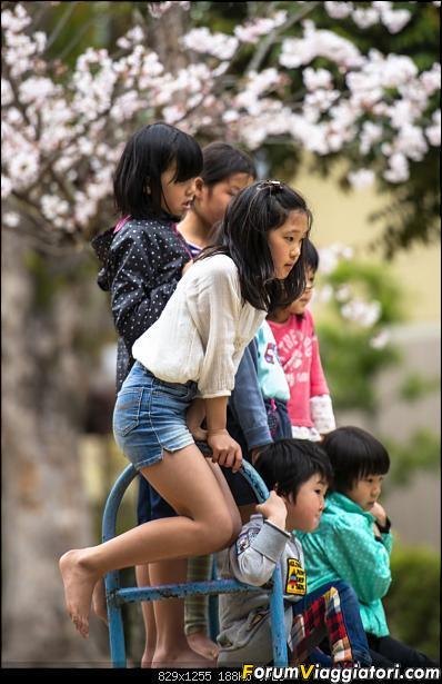 In Giappone in cerca dei ciliegi in fiore-_dsc9762.jpg