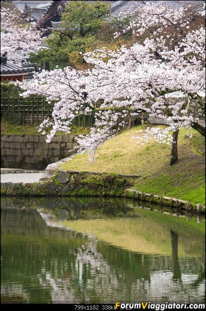 In Giappone in cerca dei ciliegi in fiore-_dsc0005.jpg