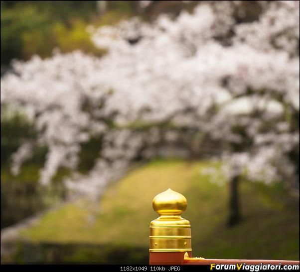 In Giappone in cerca dei ciliegi in fiore-_dsc0006.jpg