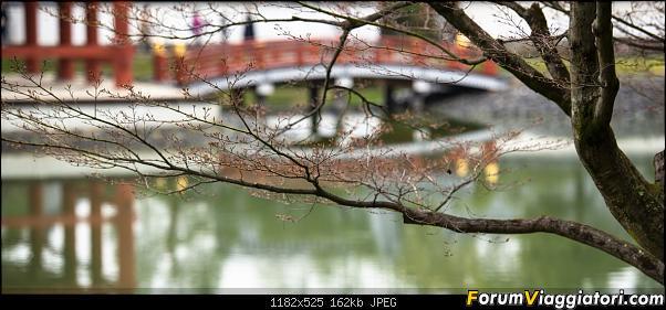 In Giappone in cerca dei ciliegi in fiore-_dsc0009.jpg
