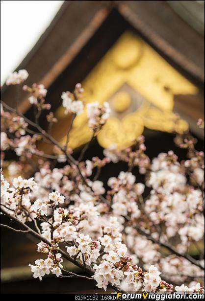 In Giappone in cerca dei ciliegi in fiore-_dsc9828.jpg