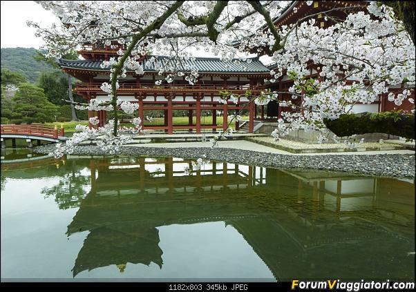 In Giappone in cerca dei ciliegi in fiore-dsc_6408.jpg