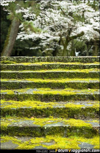 In Giappone in cerca dei ciliegi in fiore-_dsc0051.jpg