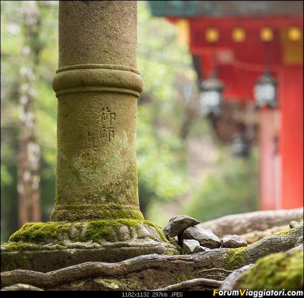 In Giappone in cerca dei ciliegi in fiore-_dsc0128.jpg