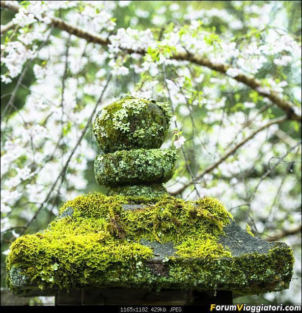 In Giappone in cerca dei ciliegi in fiore-_dsc0131.jpg