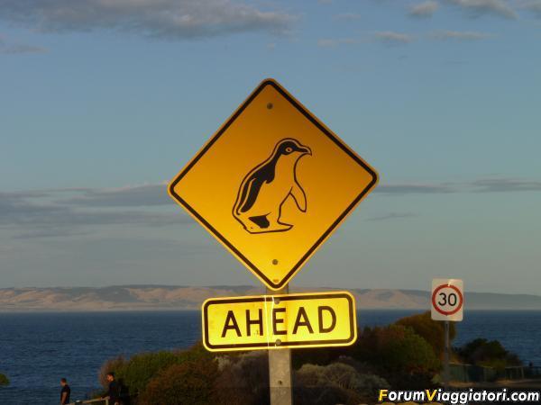 Cartello trovato a Kangaroo Island dove i pinguini di sera ritornano sulla terraferma a dormire dopo un'intera giornata trascorsa in mare