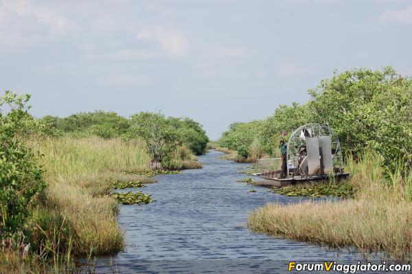 Everglades.