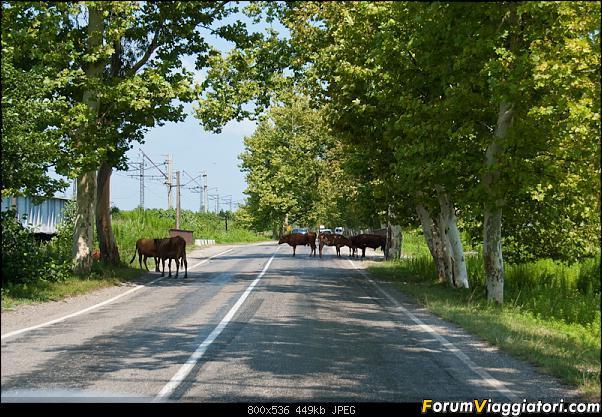 Roma-Caucaso in moto (parte 2 GEORGIA e ARMENIA)-dsc_2724.jpg