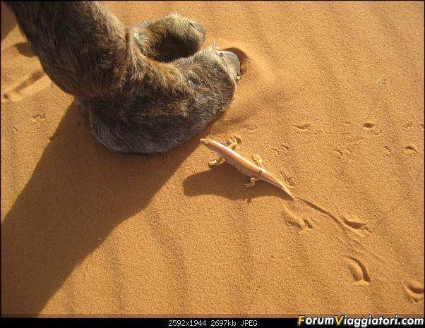 La salamandra ai piedi del dromedario