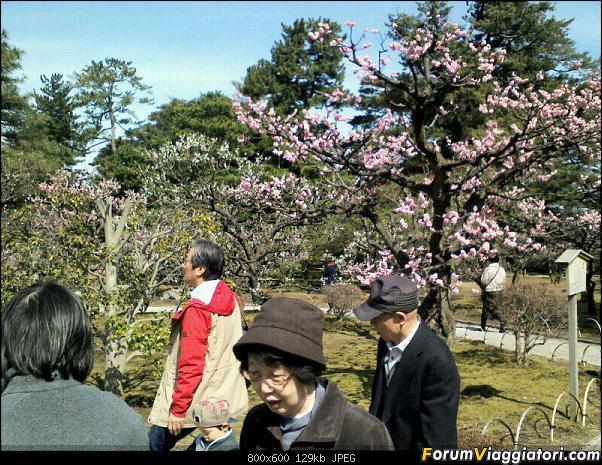 Giappone e ciliegi!!! (speriamo!)-uploadfromtaptalk1364281341239.jpg