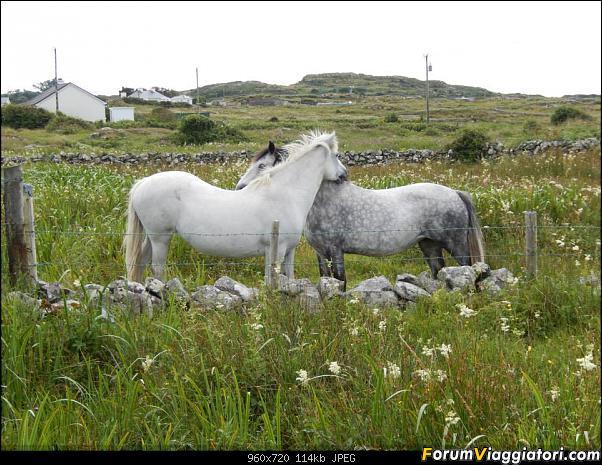 Relax in Irlanda-1002480_10151640818187961_2132712932_n.jpg