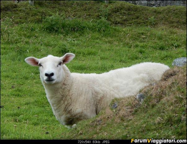 Relax in Irlanda-1001891_10151640843222961_1651639181_n.jpg