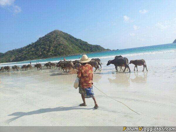 Indonesia arriviamo! verso est, un po' all'avventura-uploadfromtaptalk1377433502108.jpg