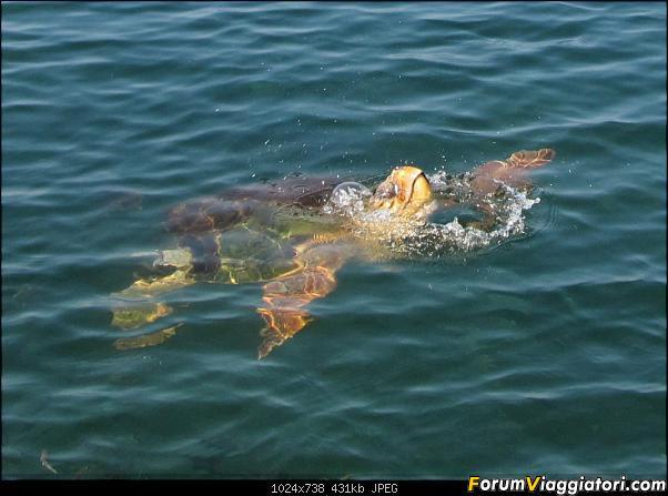 [TURCHIA - Dalyan - Escursione] Turtle Tour-01-234-close-up.jpg